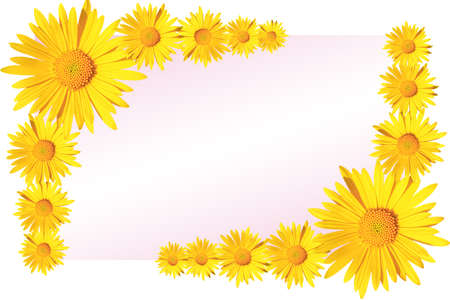 yellow daisy flowers corner arrangement on pink and white gradient background, flat lay, copy space