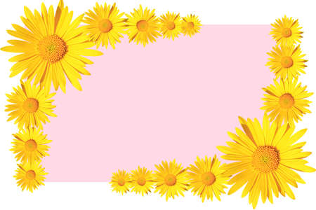 yellow daisy flowers corner arrangement on pink background, flat lay, copy space Stock fotó - 159039041