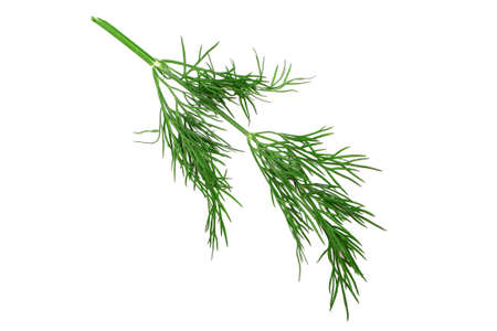 branch of dill isolated on white background