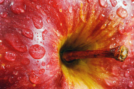 Macro of red apple.Wet ripe apple covered with water drops.