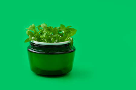 Green face cream jar with baby sprouts in it on green  background. Natural herbal cosmetics concept,