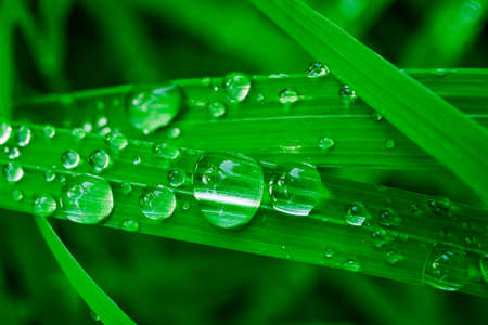 Water drops on green grass blades. Macro of rain or dew drops. Clear and fresh water concept. Stock fotó