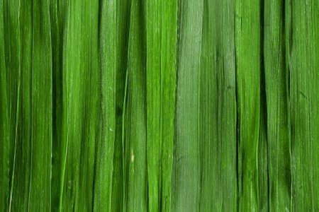 Green grass background. Backdrop made of vertical grass blades. Abstract grass texture banner.