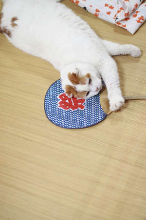 doze: Cat of the doze and  relaxed Stock Photo
