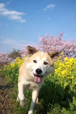 Dog of the smile and flowers photo