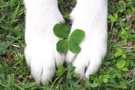 The dog and four-leaf clover