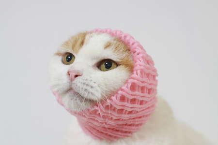 고양이 머리 덮개
