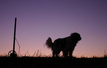 The dog and sunset photo