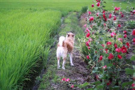 The dog and summer promenade
