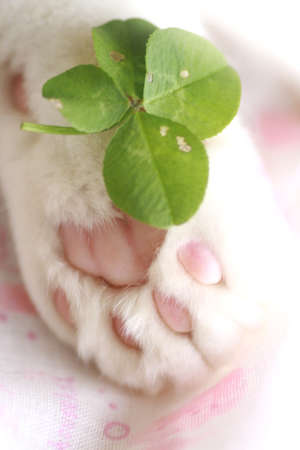Four-leaf clover and paw Stock Photo