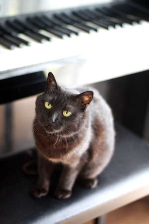 The cat and piano photo
