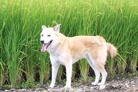 犬と緑の芝生