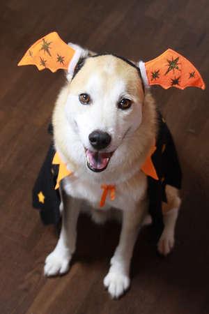 The dog on Halloween Stock Photo - 30835088