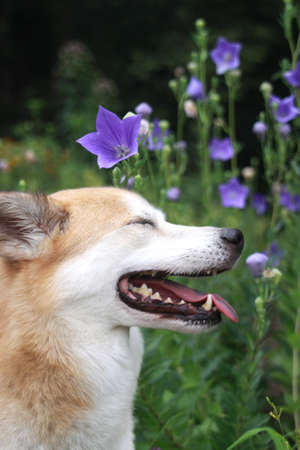 close your eyes: Dog profile and flowers