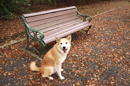 Dog and bench and fallen leaves of smile Stock Photo