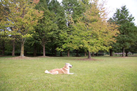 Dogs and trees that are face down on the lawn Stock Photo