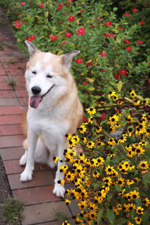 Smile of dog and flowers
