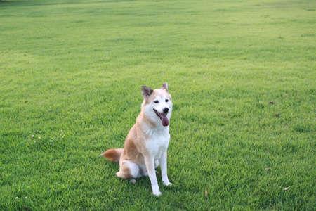 草地の上に座って犬 写真素材 - 34127457