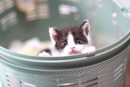 バスケットに入った子猫
