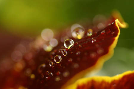 Flowers in the rain photo