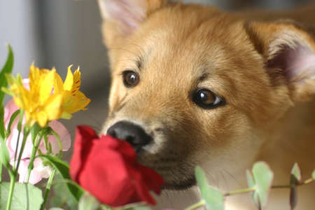 Puppy smell of flowers