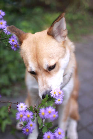 sniff: Dog sniff the smell of flowers Stock Photo