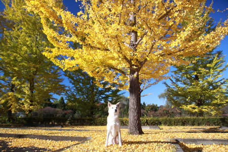 The dog and colored leaves photo