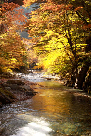 robert: Autumnal leaves and clear stream