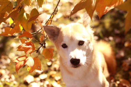 The dog and colored leaves