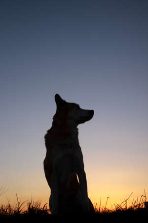 Dusk and dog silhouette
