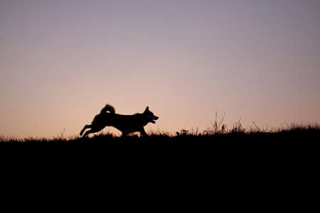 Dog running a bank in the evening