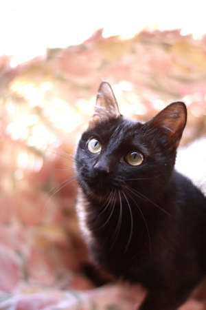 black kitten that stare Stock Photo