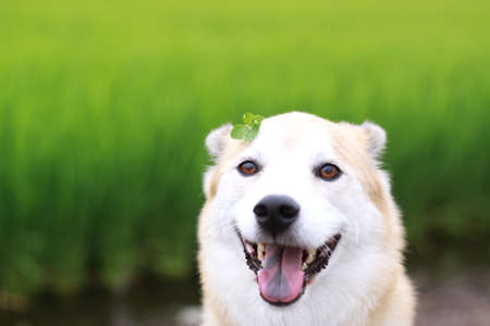 Four Leaf Clover and dog stare with a smile