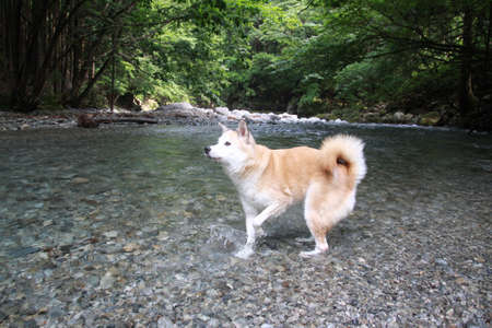 The dog is playing in the river