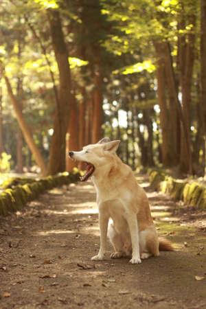 개가 숲에서 산책합니다.