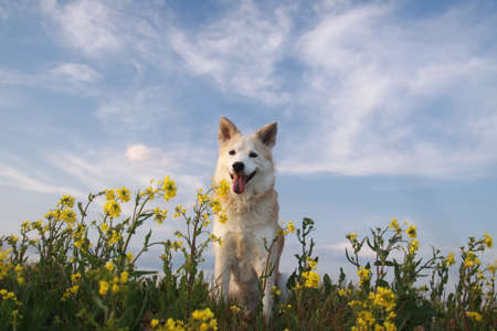 Smiling dog and flowers 写真素材