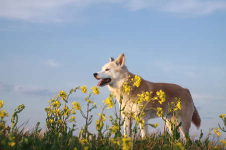 Smiling dog and flowers Stock Photo