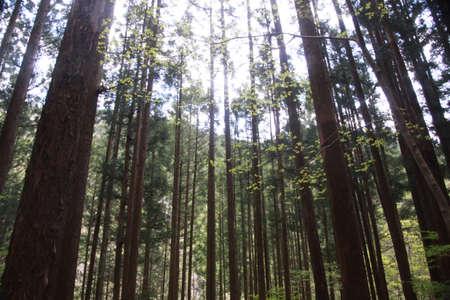 신선한 녹색 잎