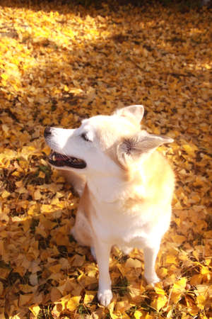 Colored leaves and dog