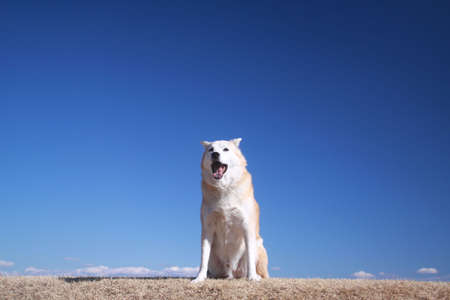 Dog and blue sky
