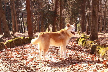 Dog walks in the forest