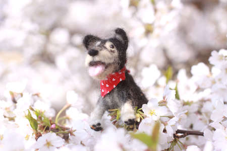 Dog stuffed and the full bloom Stock Photo