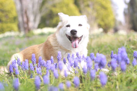 Smile dog and flowers