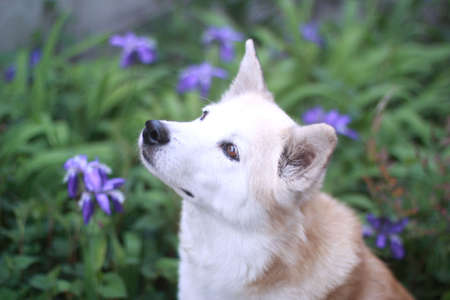 Smiling dog and flowers 스톡 콘텐츠