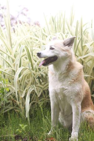 Fresh green and dog