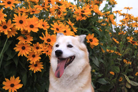 Smiling dog and flowers Stock fotó