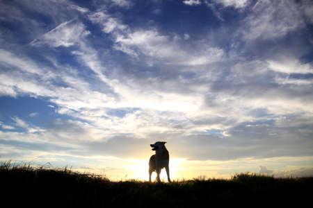 Sunset and dog