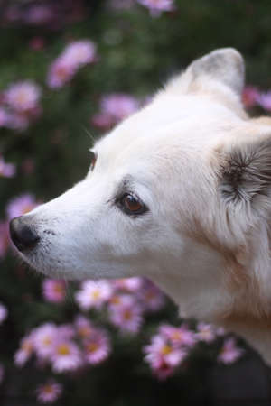 The profile of an old dog Stock Photo
