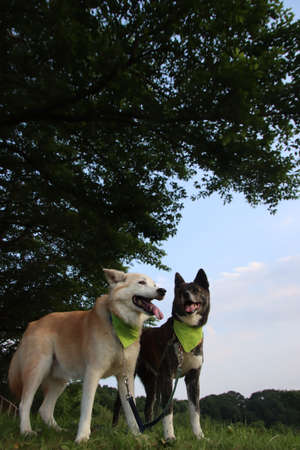 Two dogs lined up with a smile and a fresh green