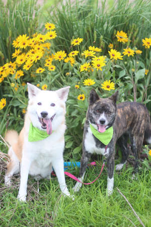 Two dogs and flowers lined up with a smile